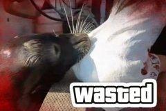 leon marino ataca niña