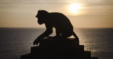 macaco al atardecer uluwatu bali