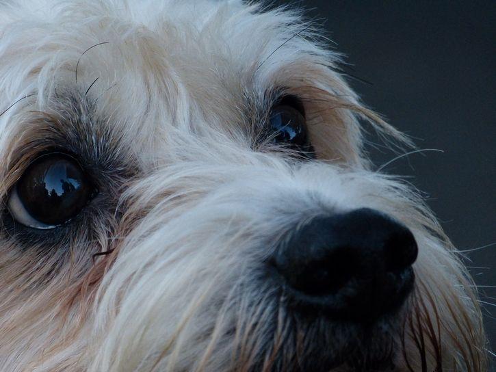 mirada tierna de perro