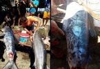 pez con tatuajes en filipinas (1)