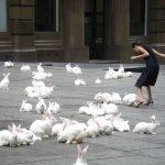 Australia liberó virus mortal para aniquilar población de conejos