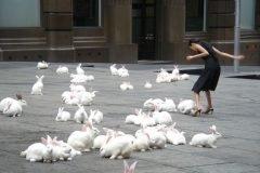 plaga de conejos en la ciudad
