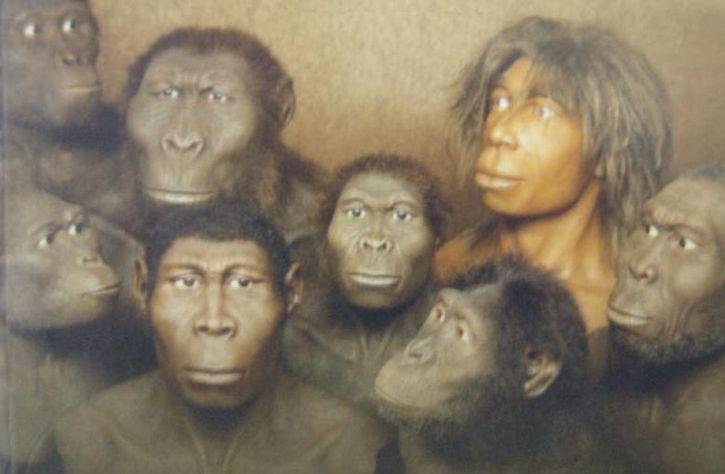 primates primitivos representacion
