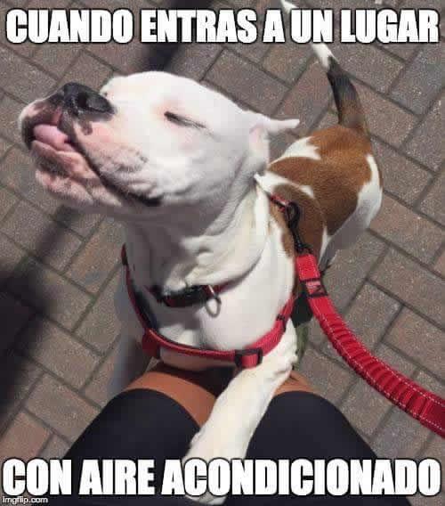 Marcianadas 284 020617000301 (101)