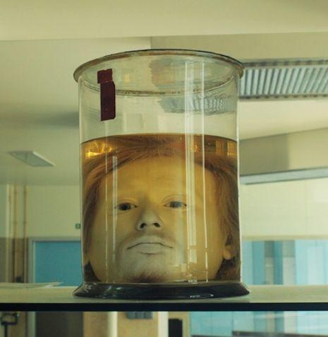cabeza de diogo alves (2)
