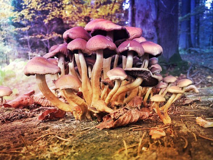 grupo de hongos
