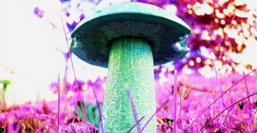 hongos magicos portada