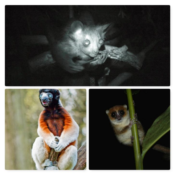 lemures etimologia portada
