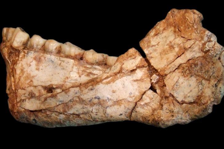 restos de mandibula homo sapiens en Jebel Irhoud