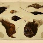 animales raros extintos portada