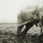 13 Fotografías raras que afinarán tu percepción del pasado