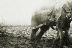 fotografios historicas raras (14)