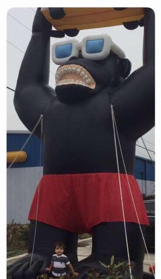 gorilla robado de la concecionaria fiat en texas