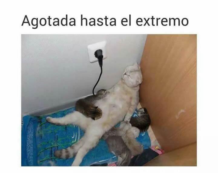 Marcianadas 294 11ago17001107 (103)