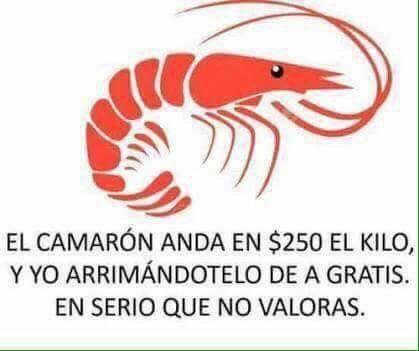 Marcianadas 295 18081701503 (29)