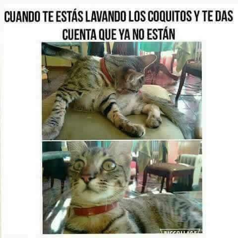 Marcianadas 297 010817001427 (70)