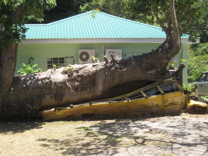 autobus escolar aplastado por arbol rep dominicana en el jardin botanico Roseau