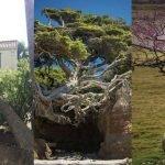 10 árboles temerarios que no respetaron límites