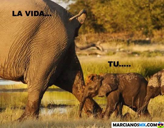 Marcianadas 301 290917001552 (275)