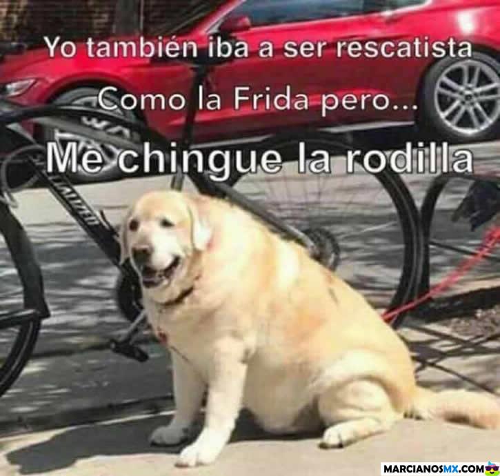 Marcianadas 301 290917001552 (305)