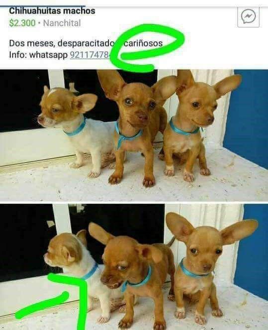 Marcianadas 301 290917001812 (30)