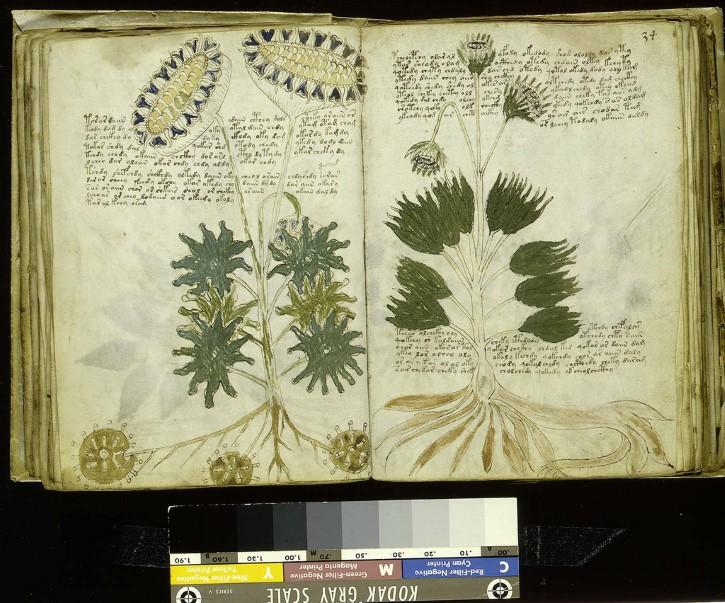 plantas en el manuscrito voynich