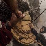 recolector miel en el himalaya