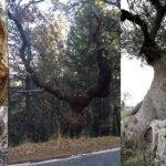 20 árboles extraños que tendrás que observar dos veces