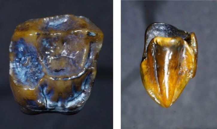 dientes hominidos encontrados en alemania