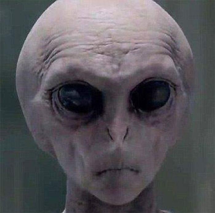 gris extraterrestre