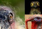 las aves más feas