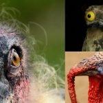 Las siete aves más feas de la naturaleza