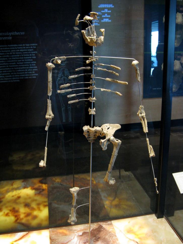 lucy en Museo Nacional de Antropología de México.