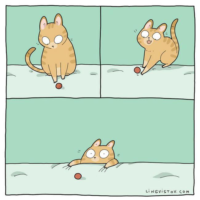 viviendo con gatos (13)