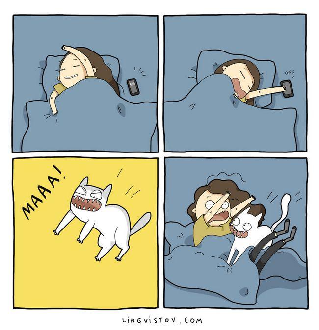 viviendo con gatos (14)