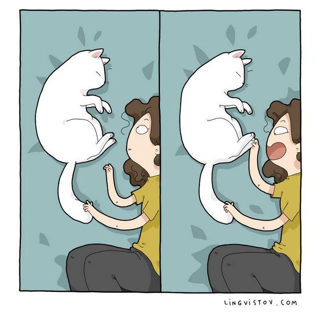 viviendo con gatos (15)