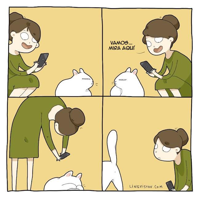 viviendo con gatos (2)