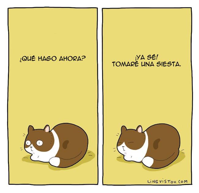 viviendo con gatos (8)
