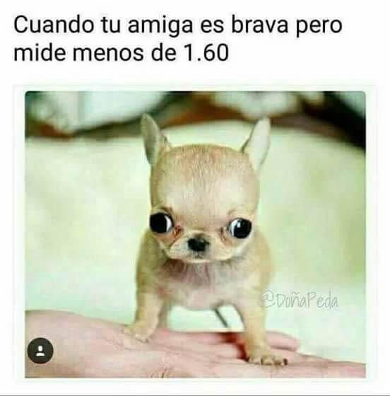 Marcianadas 309 241117001201 (13)