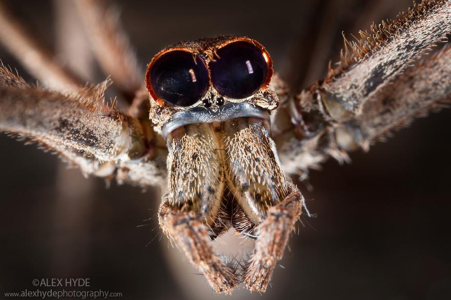 arañas de cerca (1)