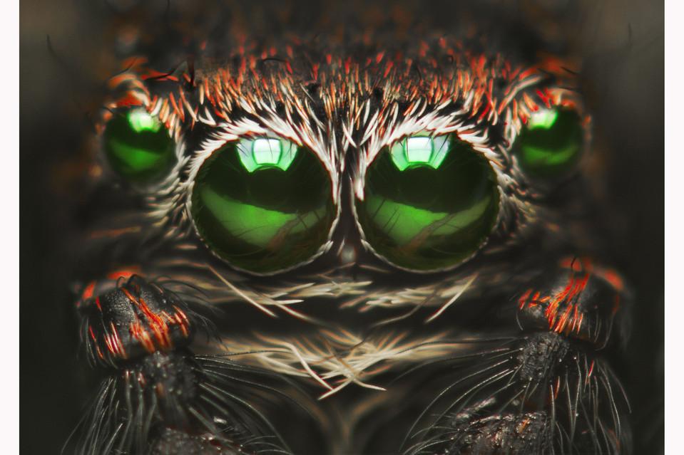 arañas de cerca (2)
