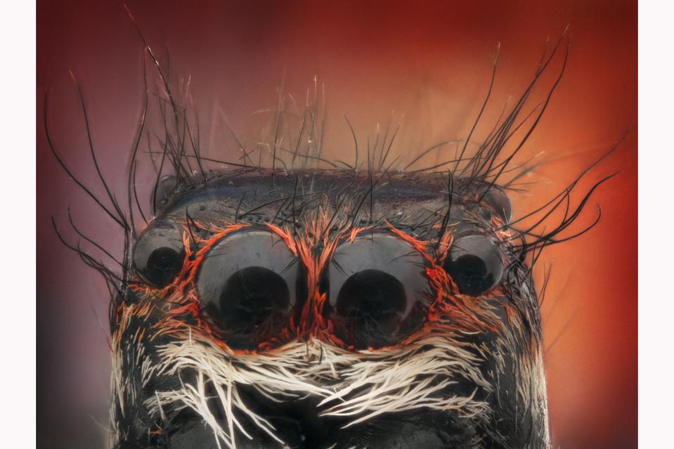 arañas de cerca (3)