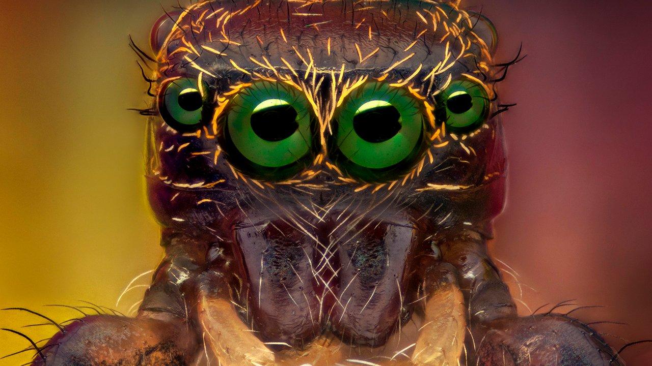 arañas de cerca (4)