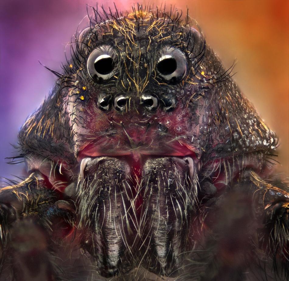 arañas de cerca (5)