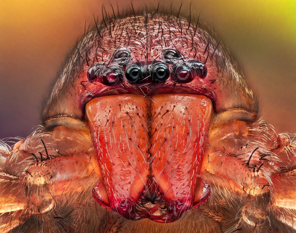 arañas de cerca (6)
