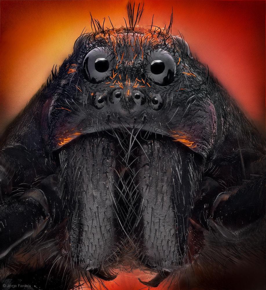 arañas de cerca (7)