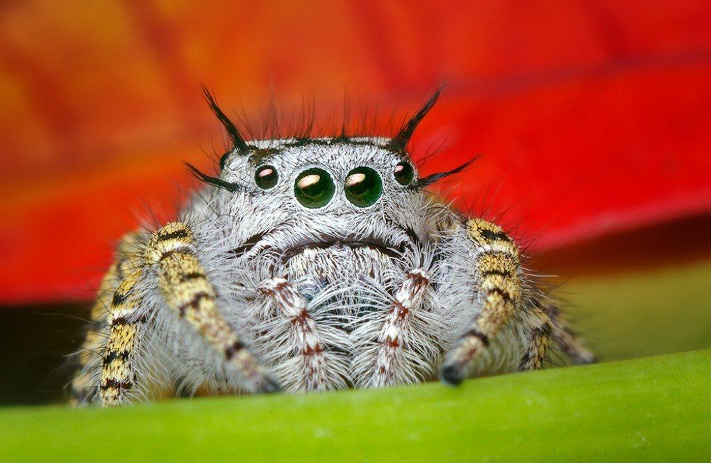 arañas de cerca (8)