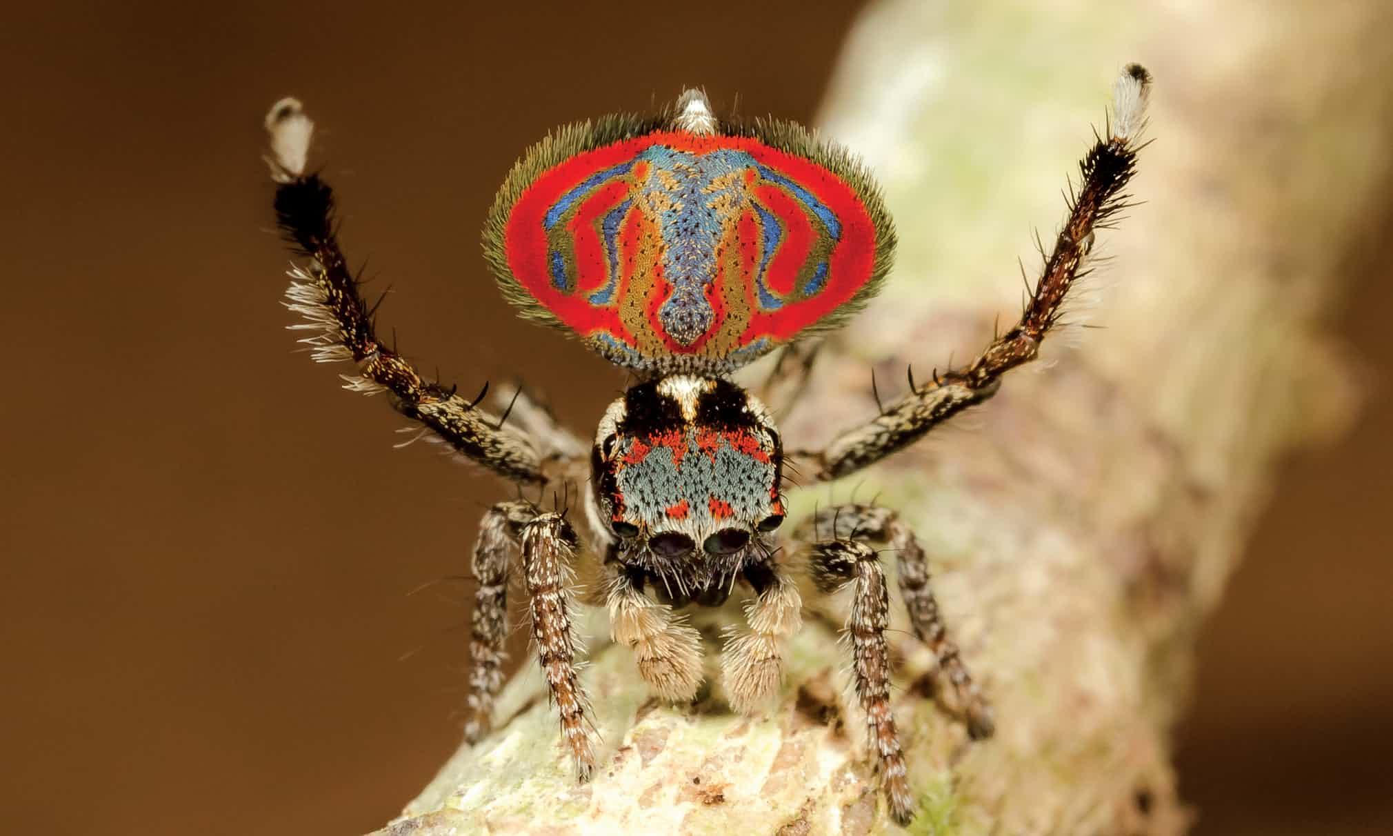 arañas de cerca (9)