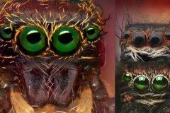 arañas en close up portada