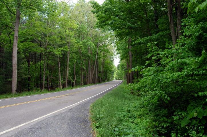 carretera solitaria en el bosque